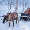 Tra poco Babbo Natale resterà senza renne